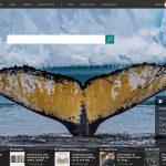 Bing Search web screenshot own