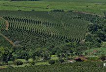 CoffeePlantation Brazil wikimedia