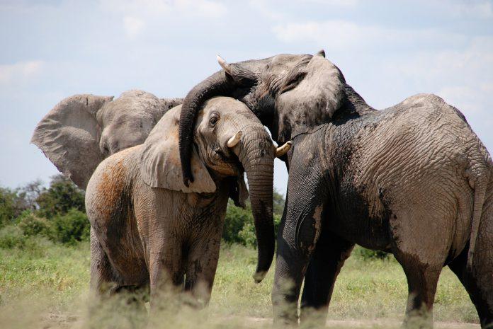 Elephant Stock photo pixabay